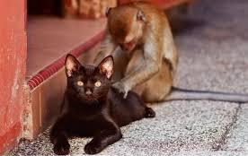 massaggi animali